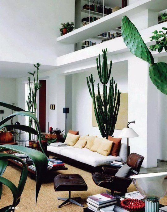 cacti6